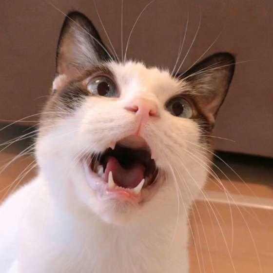 ごはんをねだる猫