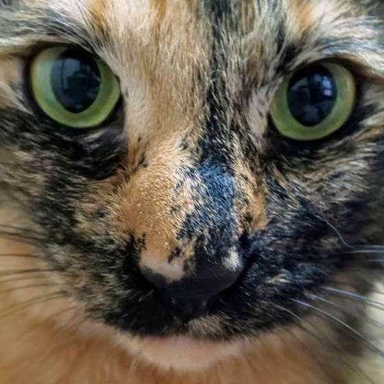 サビ猫のアップ