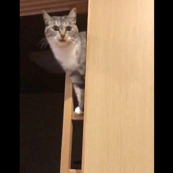障子にのぼる猫
