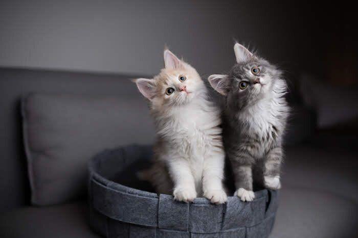 首をかしげる2匹の子猫