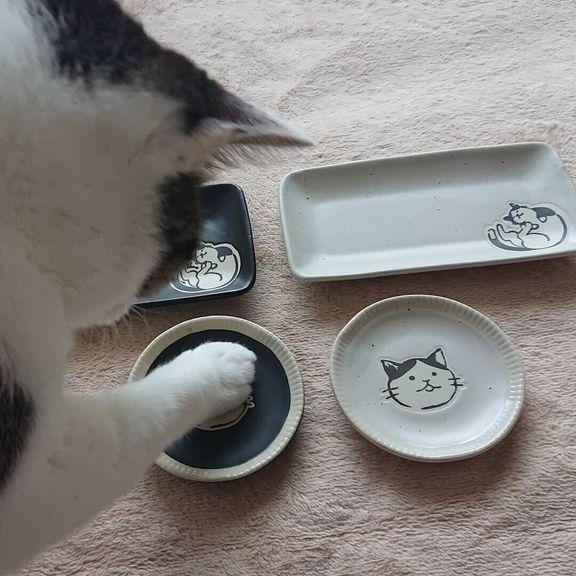 丸皿にタッチする猫