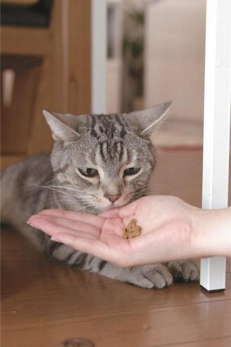 猫のおやつの選び方