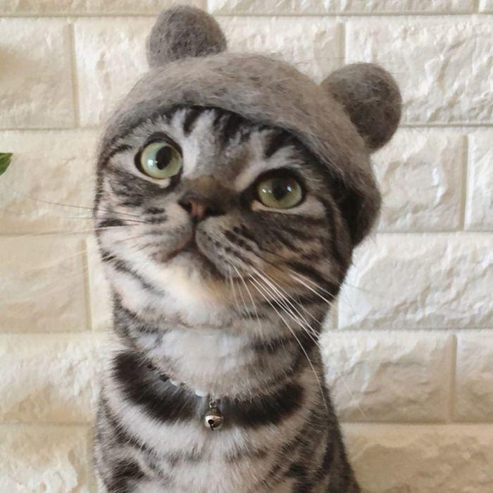 猫毛ハットをかぶった猫