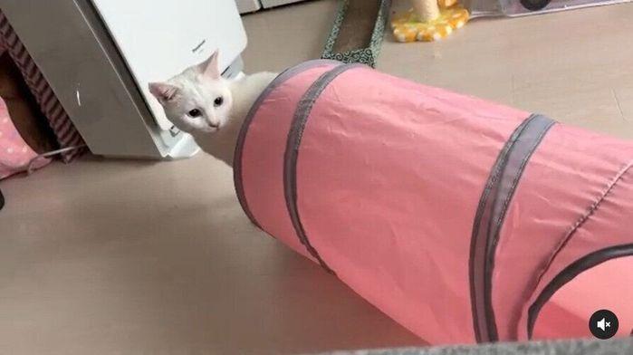 逃げていく猫を見つめる猫