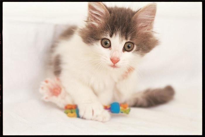猫と楽しく遊ぶ