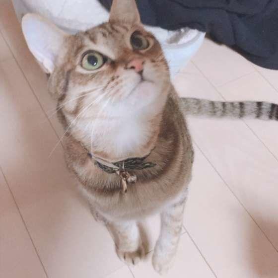 おやつを待つ猫(MIX、♂)