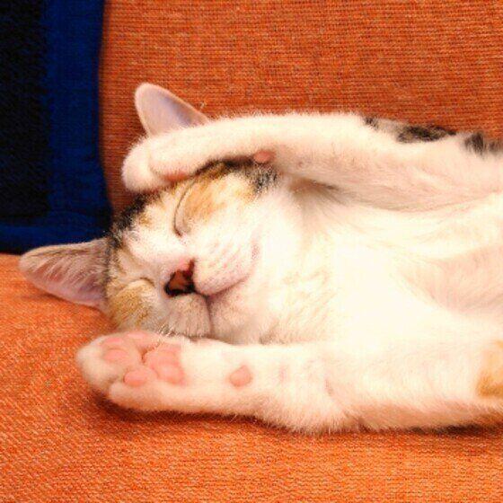 肉球を見せて寝る猫