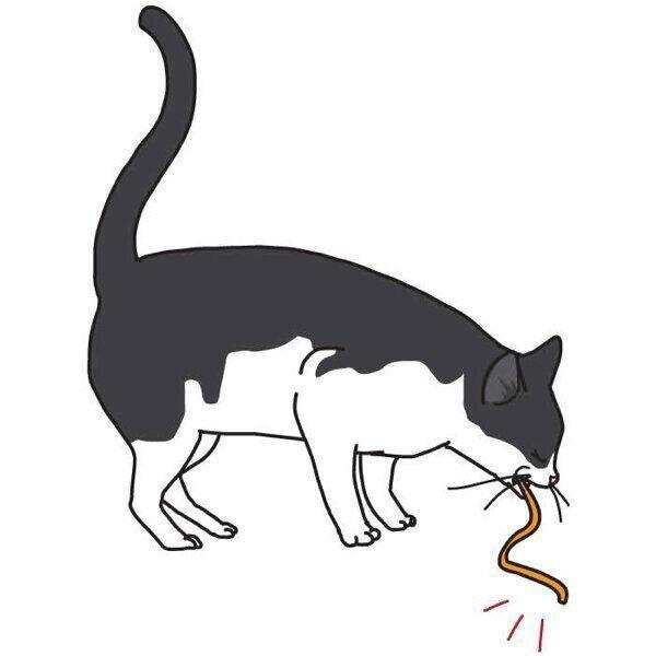 誤食した猫