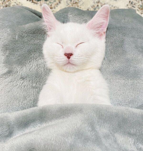 布団をかけて眠るまおくん
