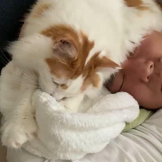 タオルをモミモミする猫