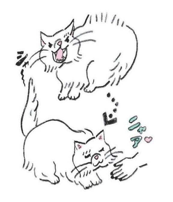 YES or NOが見極めにくい猫の5つの行動やしぐさ