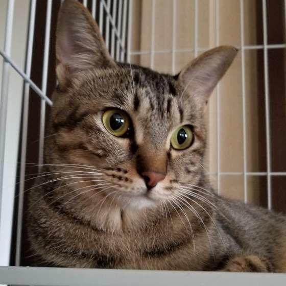 ケージが大好きな猫(MIX)