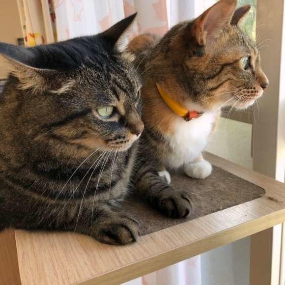 ニャルソックする猫