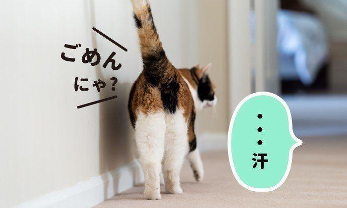 今泉先生に聞く「猫へのギモン」