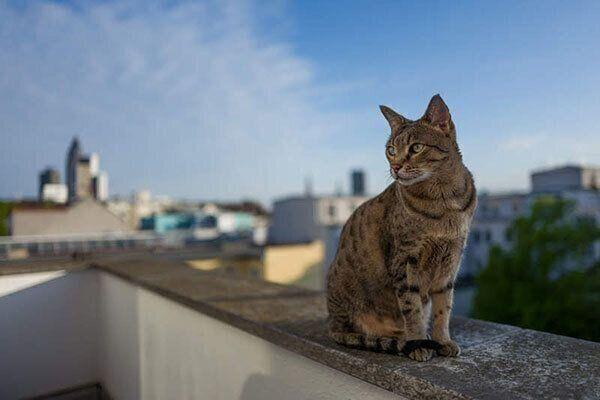 外にいる猫
