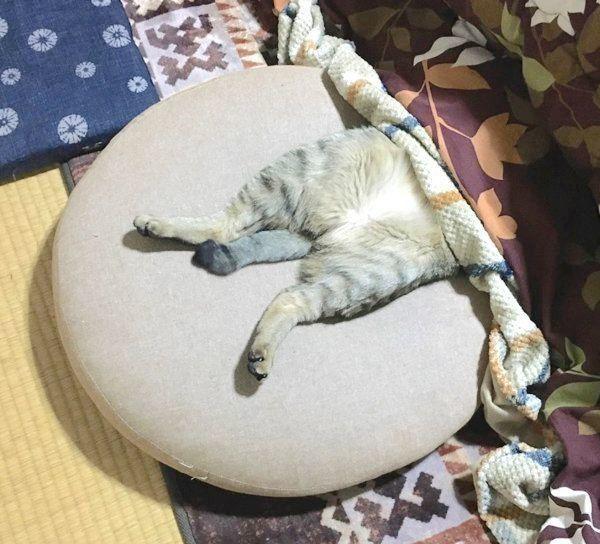 バンザイ寝するこんぶくん