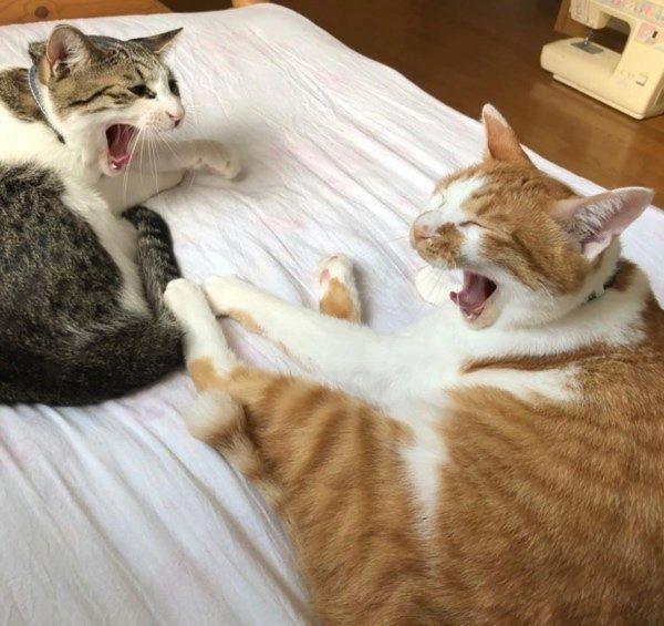 動きがシンクロする猫