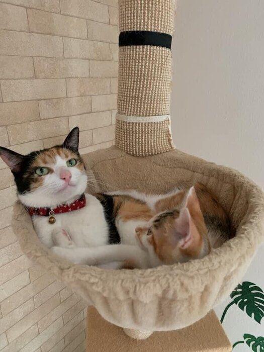仲よく使う三毛猫姉妹