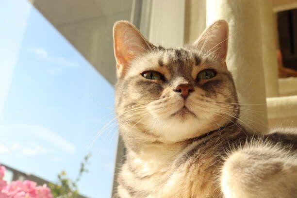 自分が感染した時にも役立つ 「新型コロナに感染した飼い主さんの猫」を預かる時に気をつけること
