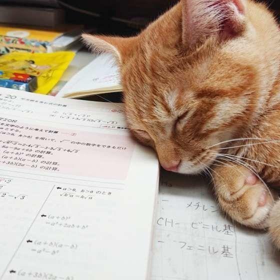 宿題の上で眠る猫