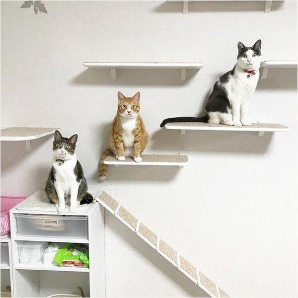 保護猫3兄弟