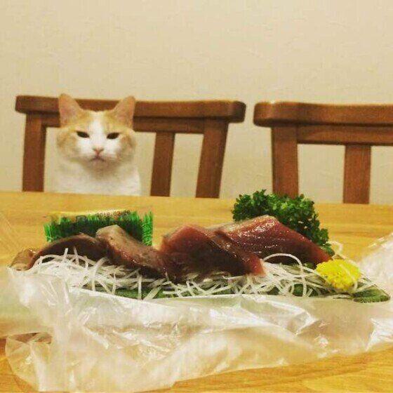 うっかりや少量でもダメ! 猫が絶対に食べてはいけない食べ物