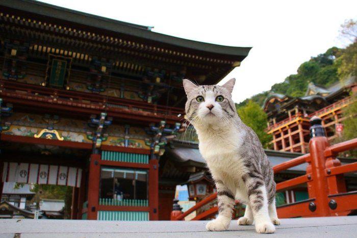 祐徳稲荷神社でポーズを決めるニャン吉