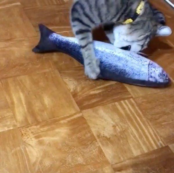 魚のぬいぐるみで遊ぶ猫