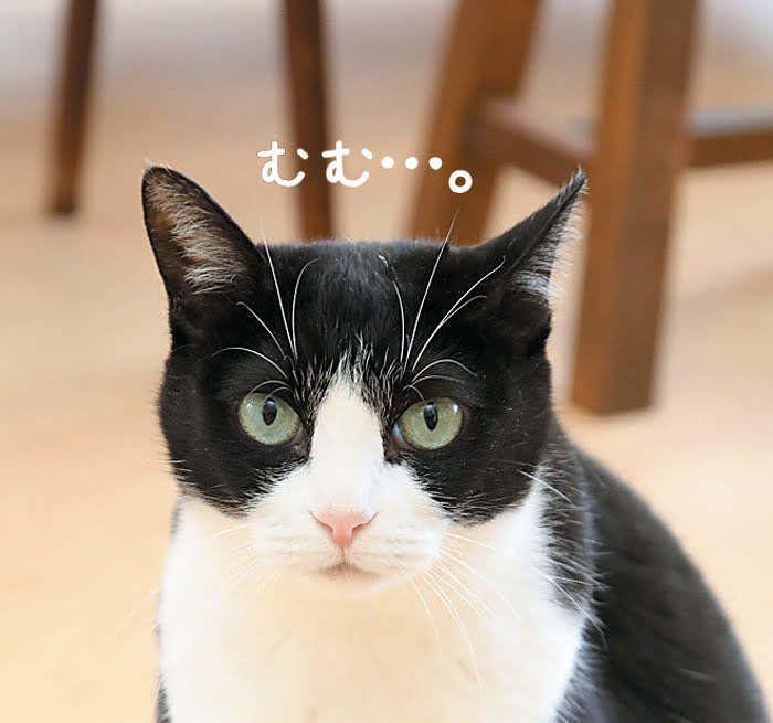 片耳だけを音のする方に向ける猫