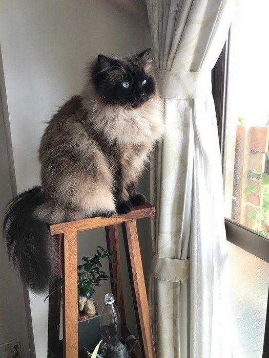 木の台に乗って外を見ている猫