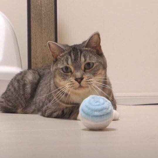 ボール遊びする猫