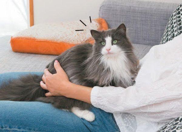チョコンとのるしぐさでわかる猫の気持ち