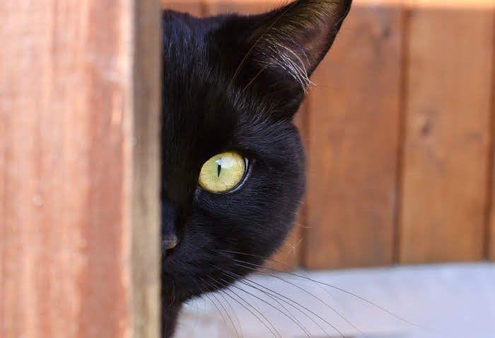 のぞき見する黒猫