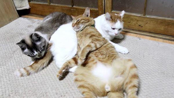 猫枕する猫たち