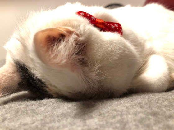 顔を下に向けて寝ているMIX白