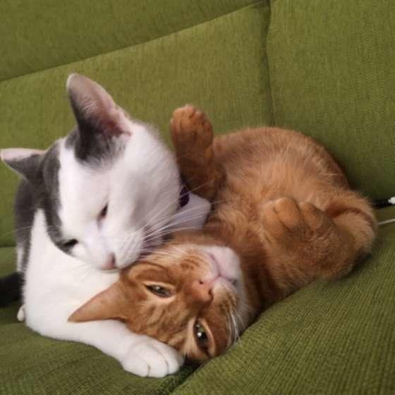 仲良く寄り添う猫