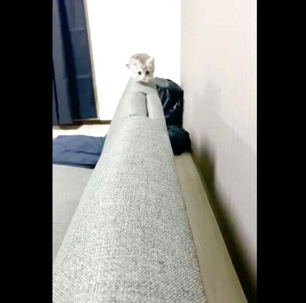 初めてソファに登れたもち様