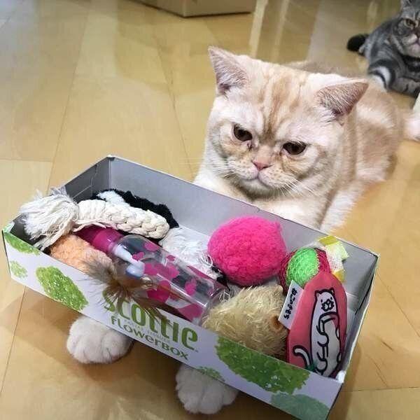 手におもちゃを乗せられた猫
