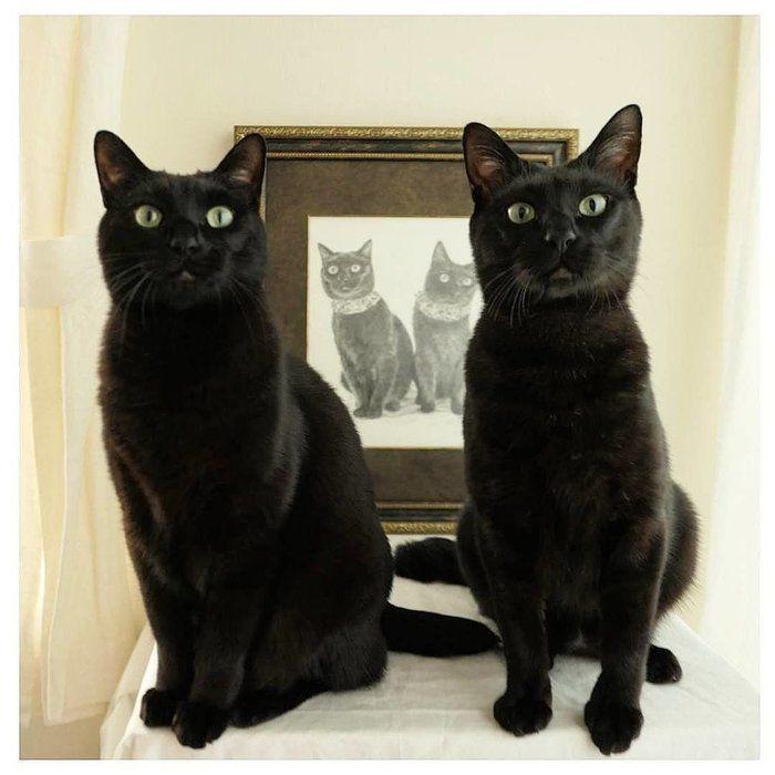 まさに絵になる黒猫兄弟