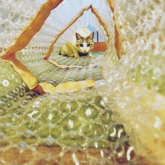 気泡緩衝材の猫トンネル