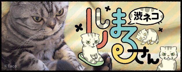 「猫のモノは、猫のモノ」。私の物も、やっぱり猫に捧げてしまうお話【連載】渋ネコししまるさん #98