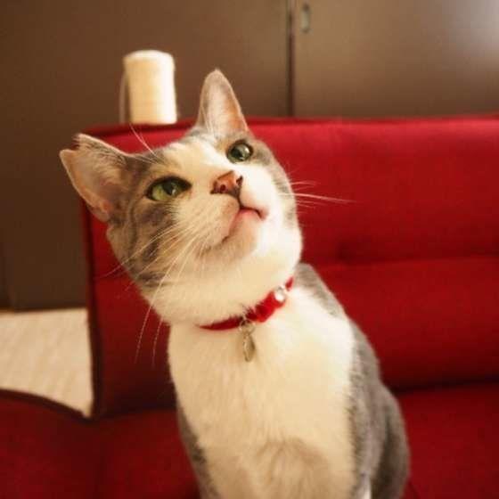 赤いソファの上にいる猫