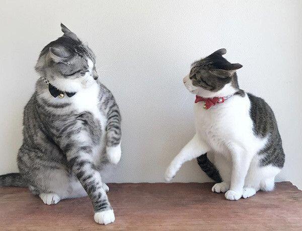 イカ耳で見つめ合う猫