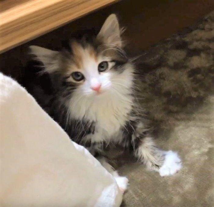 カメラ目線の子猫