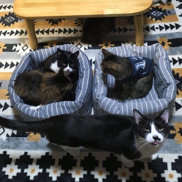 自作猫ベッドに入る猫たち