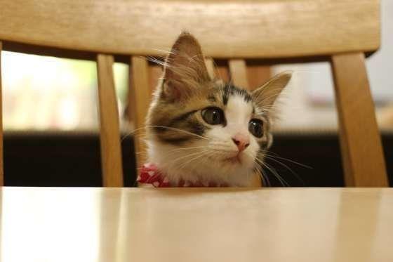 ご飯を待つ子猫