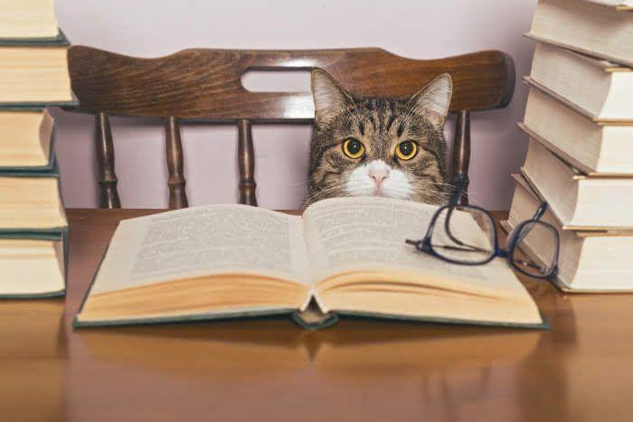 本の前に座る猫