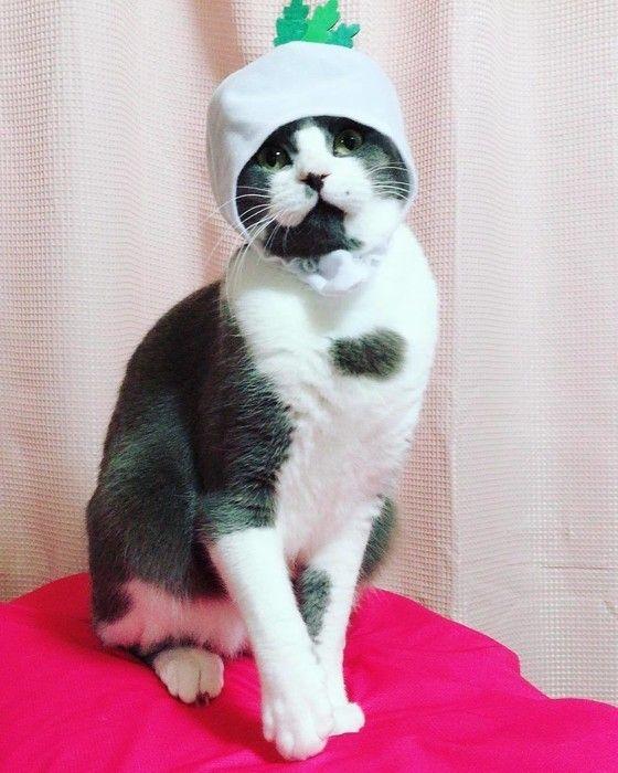 大根のかぶりものをする猫、マシュくん