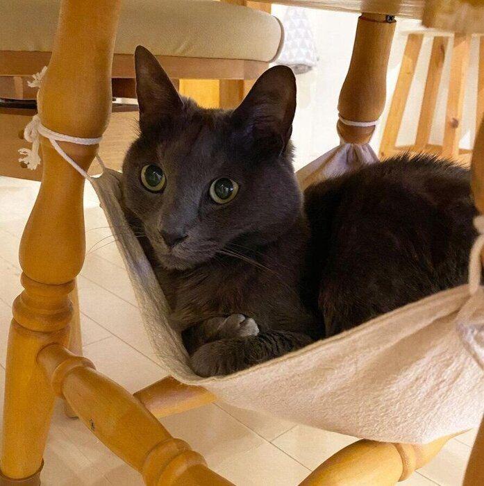 椅子の下のハンモックに座る猫