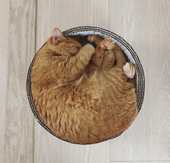 円形の手作りダンボールベッド